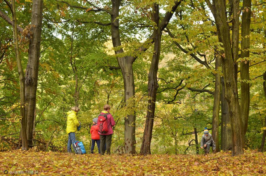 Jesień w Puszczy Zielonce