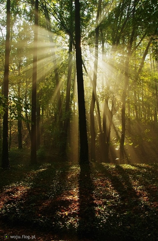 Latarnia leśna