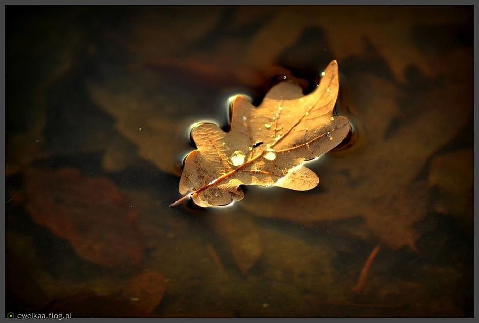 Senna jesień...dla Ciebie Beatko w podziękowaniu za Twój piękny świat... :)