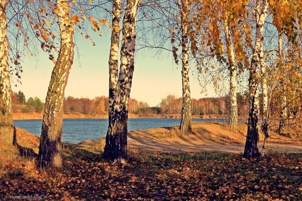 Kolorowy listopad ... jeszcze ciepły ...
