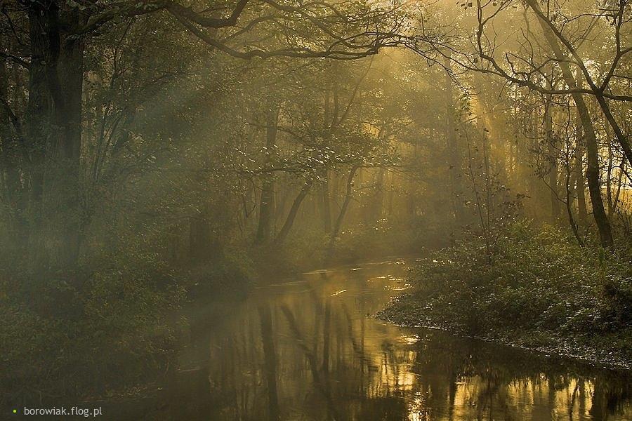 Wierna rzeka, bo zawsze coś znajdę...