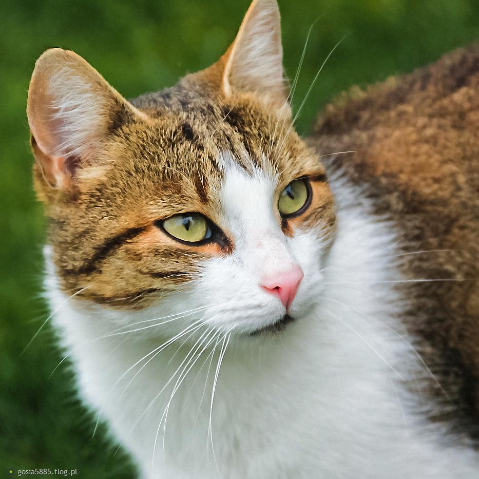 Portret kota (zrobiony w Polsce) - milutko pozdrawiam.