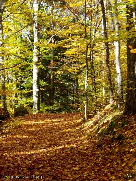 http://s17.flog.pl/media/foto_middle/10565037_jesienny-dywan.jpg