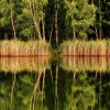 Odbicie  :: choć to nie jest jesień j<br />ak w wierszu , nastrojem <br />oba teksty zbliżone :)   <br />Zielona woda złotym o