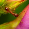 Mrówka #1