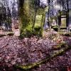 Cmentarz Żydowski przy Br<br />ackiej 12.               <br />                         <br />               Każdemu z <br />serca drzewo wyrasta