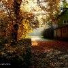 Jesiennie ... :: Jesień mnie cieniem zwięd<br />łych drzew dotyka, Słońce<br /> rozpływa się gasnącym zł<br />otem. Pierście�