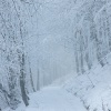 Bieszczadzka zima. :: W drodze na Połoninę Wetl<br />ińską.
