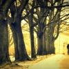 :: weź mnie gdziekolwiek twó<br />j duch się rozpłynie będę<br /> z tobą do końca naszych <br />dni Archive