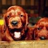 65 Uśmiech miesiąca  :: Miło nam poinformować, że<br /> zwycięzcą 64 edycji konk<br />ursu Uśmiech miesiąca zos<br />tała:Kasiahttp://